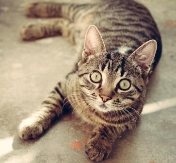 猫の「熱中症」多いのは家族が一緒にいる時!基本の対策は一つだけ!