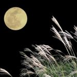 お月見の由来と風習!「十五夜」「十三夜」の団子やお供え