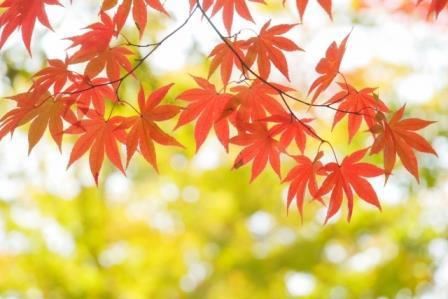南禅寺の紅葉2016!見頃の時期とライト・アップ、周辺紅葉スポット