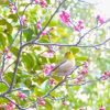 春はいつから!暦で気象庁で生物で、平年で暖かくなるのはいつ?