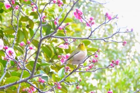 「大阪城公園」の梅林!2018年の開花情報、場所はどこ?